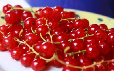 Komplettera Pomi-T med röda bär och äppelskal