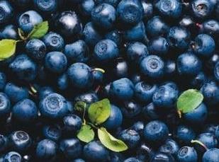Blåbär ökar antalet goda bakterier och motverkar tarmsjukdomar